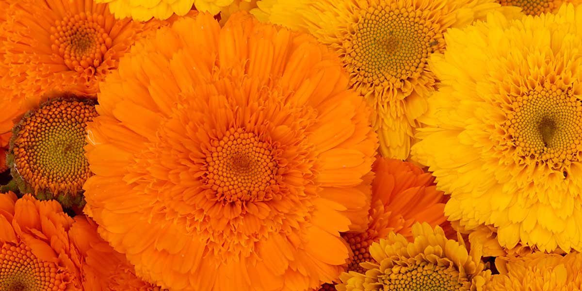 yellow_orange